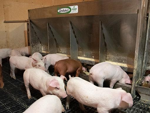 Brehmer PT Feeder in a nursery barn.